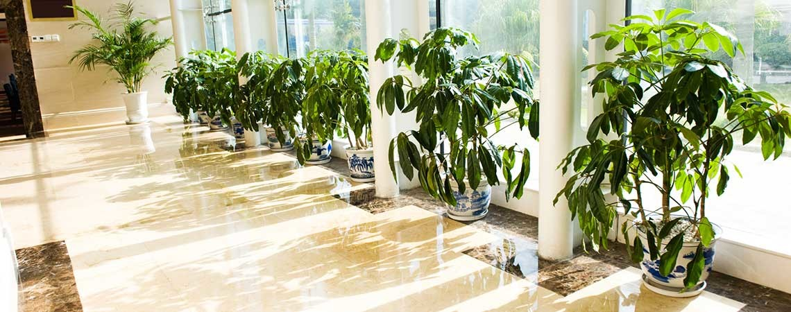 Commercial Office Cleaning and Janitorial Service